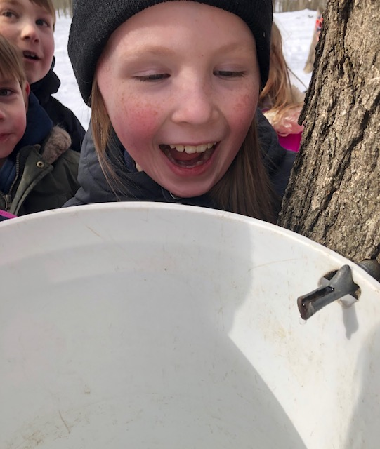 2nd grader watching sap drip from tree