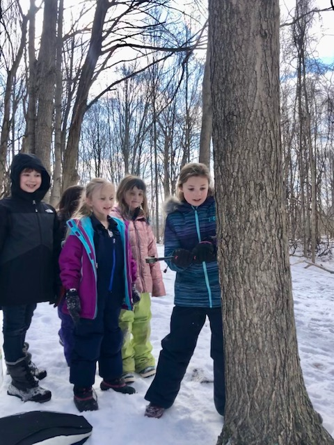 Second graders tapping tree